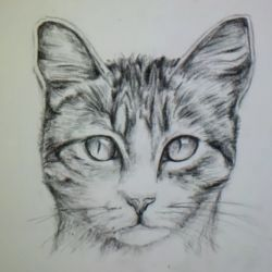 Comment dessiner un chat ?